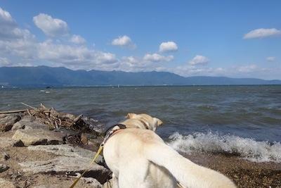 ゴンと琵琶湖