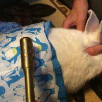 ウサギにお灸