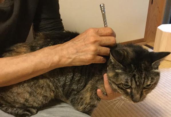 猫にてい鍼