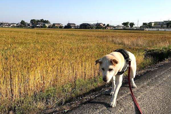 ゴン、散歩