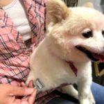札幌でペット鍼灸入門講座を開催します