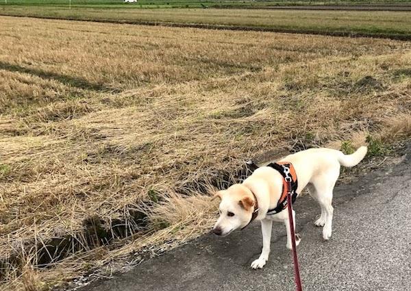 ゴンの散歩