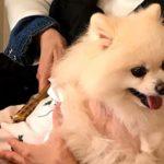 ペット鍼灸・札幌講座のご参加ありがとうございました