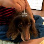 犬にローラー鍼〜体の中の流れをよくしよう
