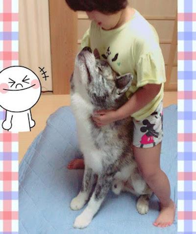 秋田犬とお子さん