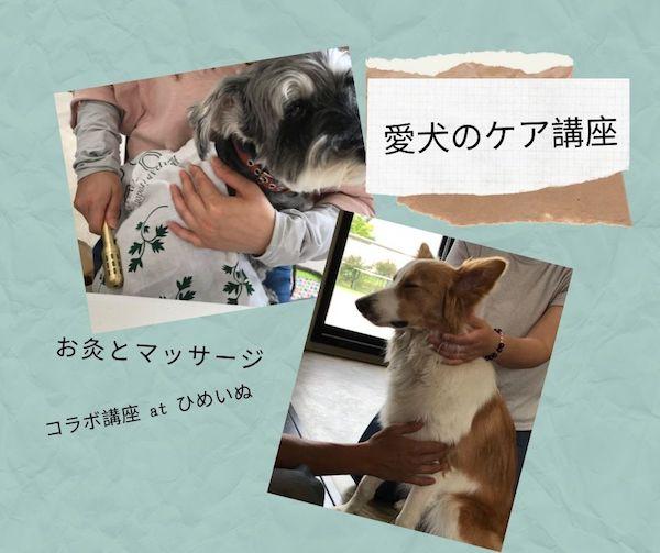 愛犬のケア講座