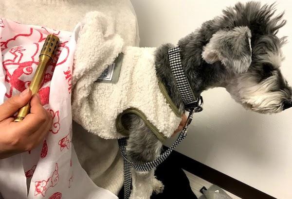 シニア犬にお灸の使い方を講座
