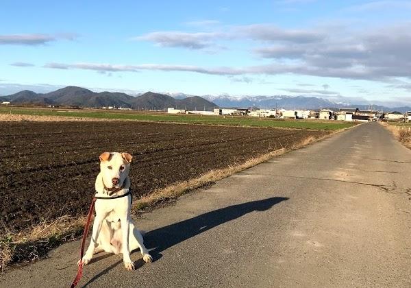 我が家の犬から新年のご挨拶