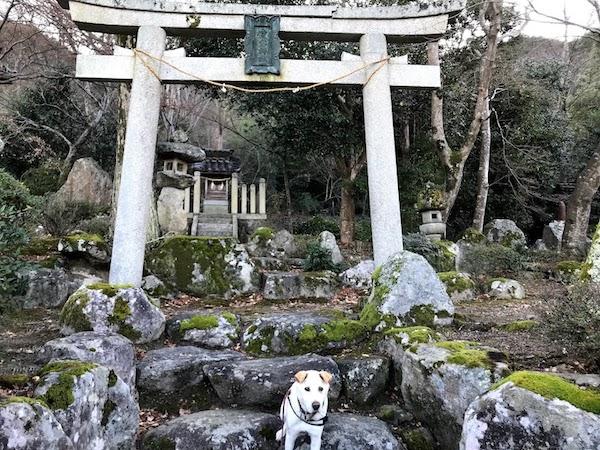 我が家の犬から神社の前でご挨拶