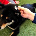 犬の椎間板ヘルニア、飼い主さんにできるケアがあります