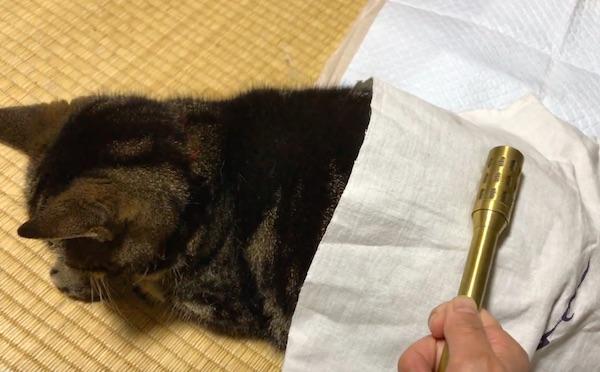 猫に温灸ローラー