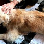 春には犬もてんかん発作が増える?